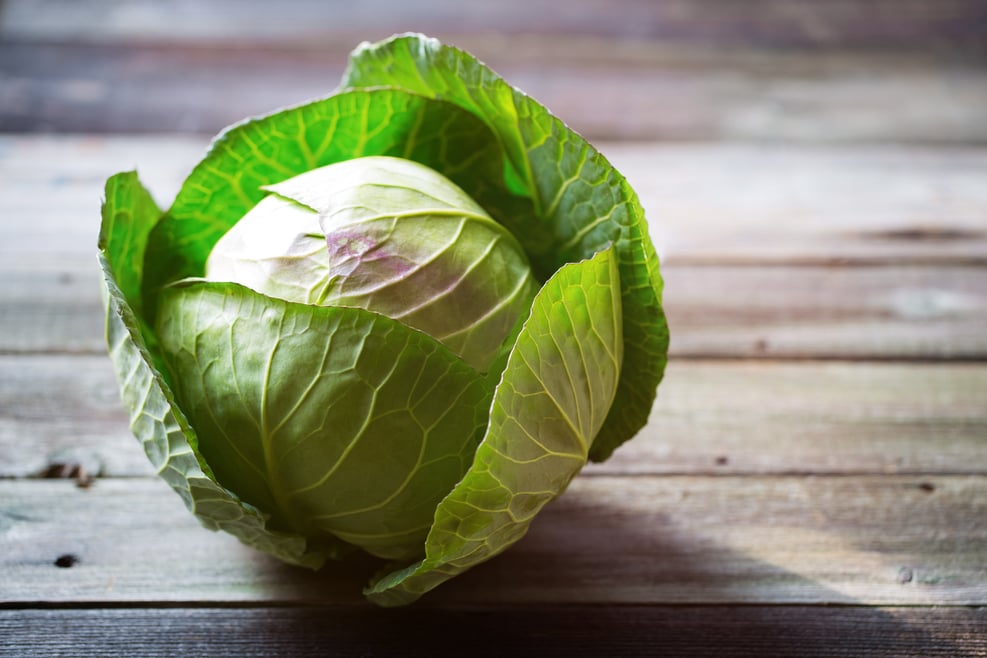 Cabbage (white cabbage)